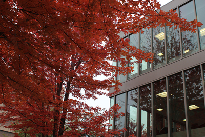 a red maple outside of Douglas Hall